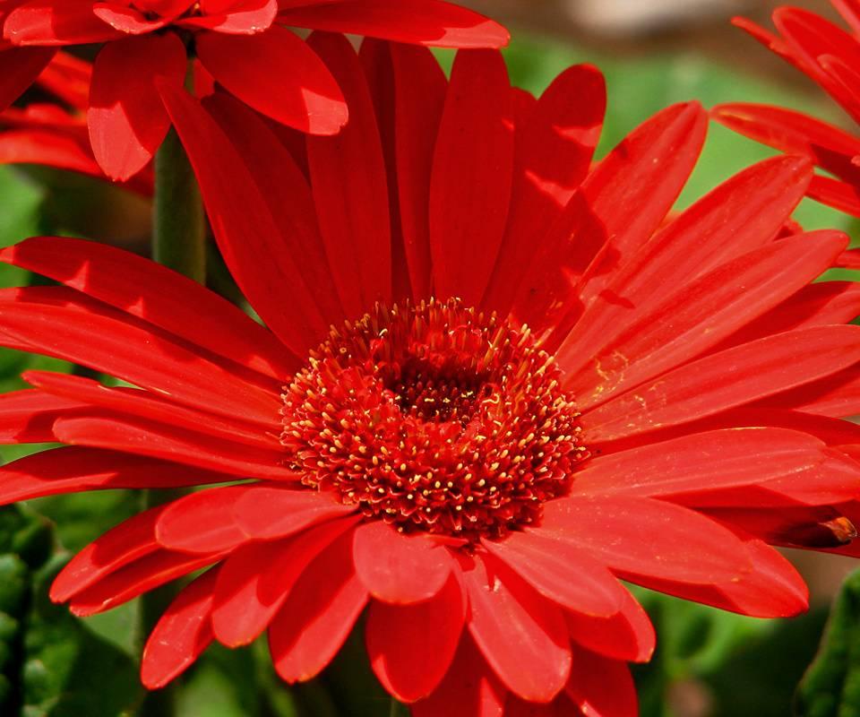 Lt-red Flower2