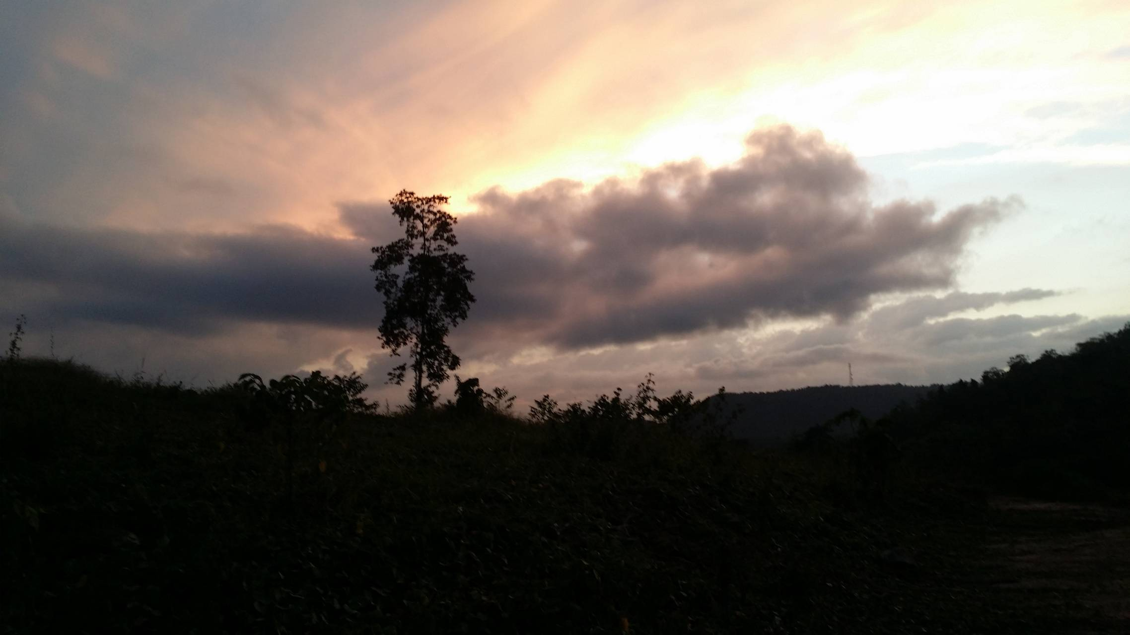 a tree in evening