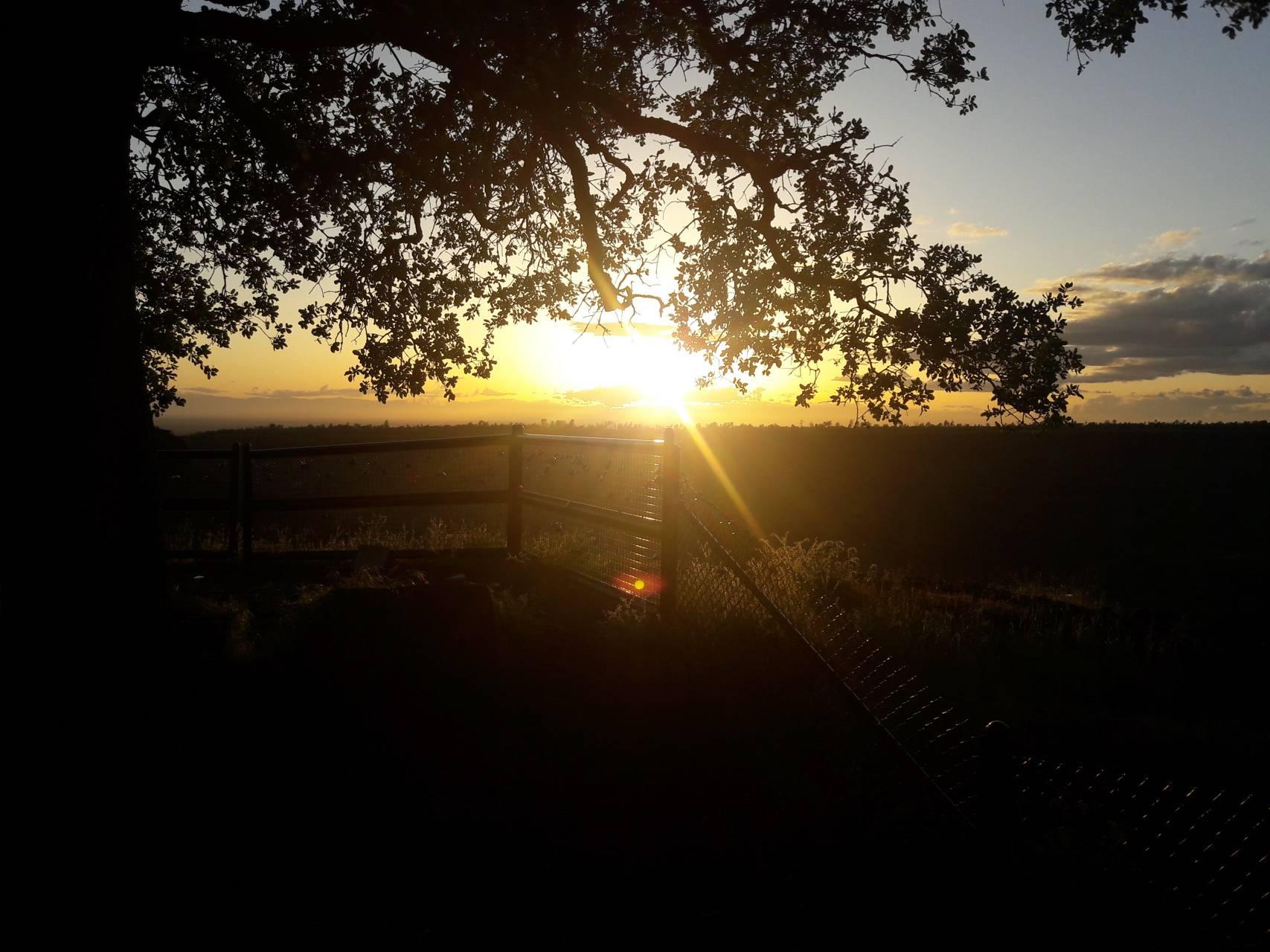 NorCal Sunset