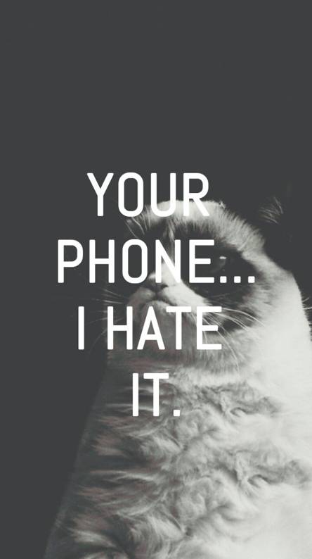 Grumpy Cat Wallpapers Free By Zedge