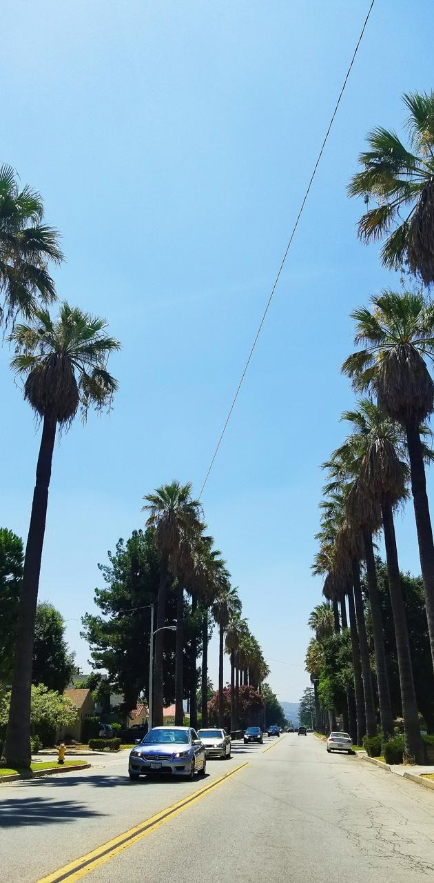 California Vibez