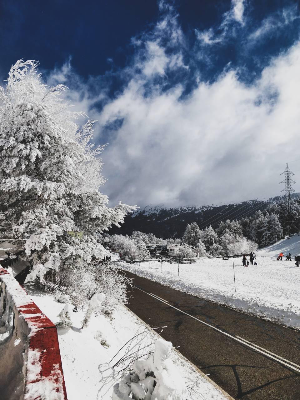 White frozen tree