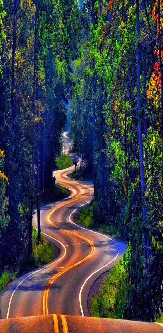 Forest road trees