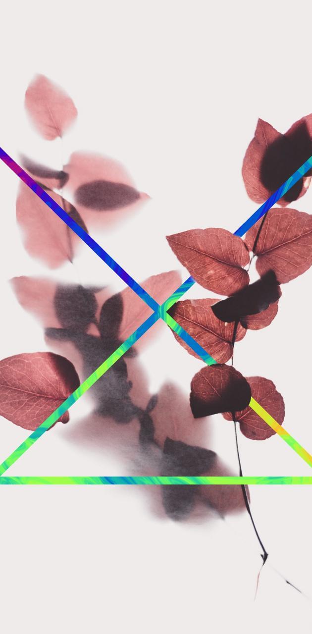 Shapical leaf
