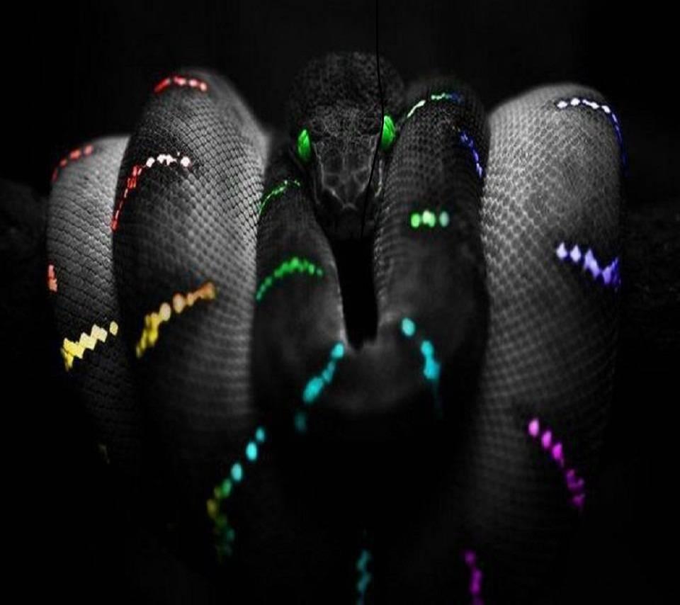 Colour Snake