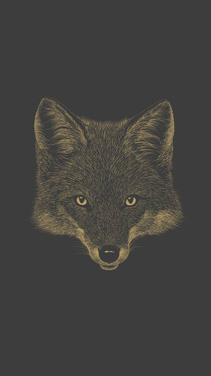 Grey Fox Wallpaper By Oliversix 39 Free On Zedge