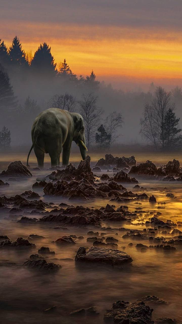 Lonely elephant