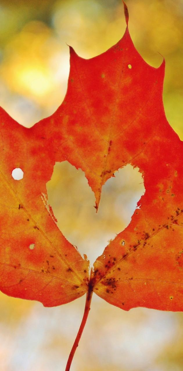 heart mapple leaf