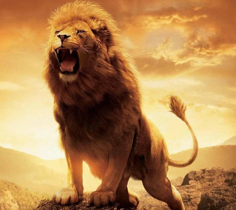 Beautiful Lion Wallpaper By Djbattery2012 18 Free On Zedge