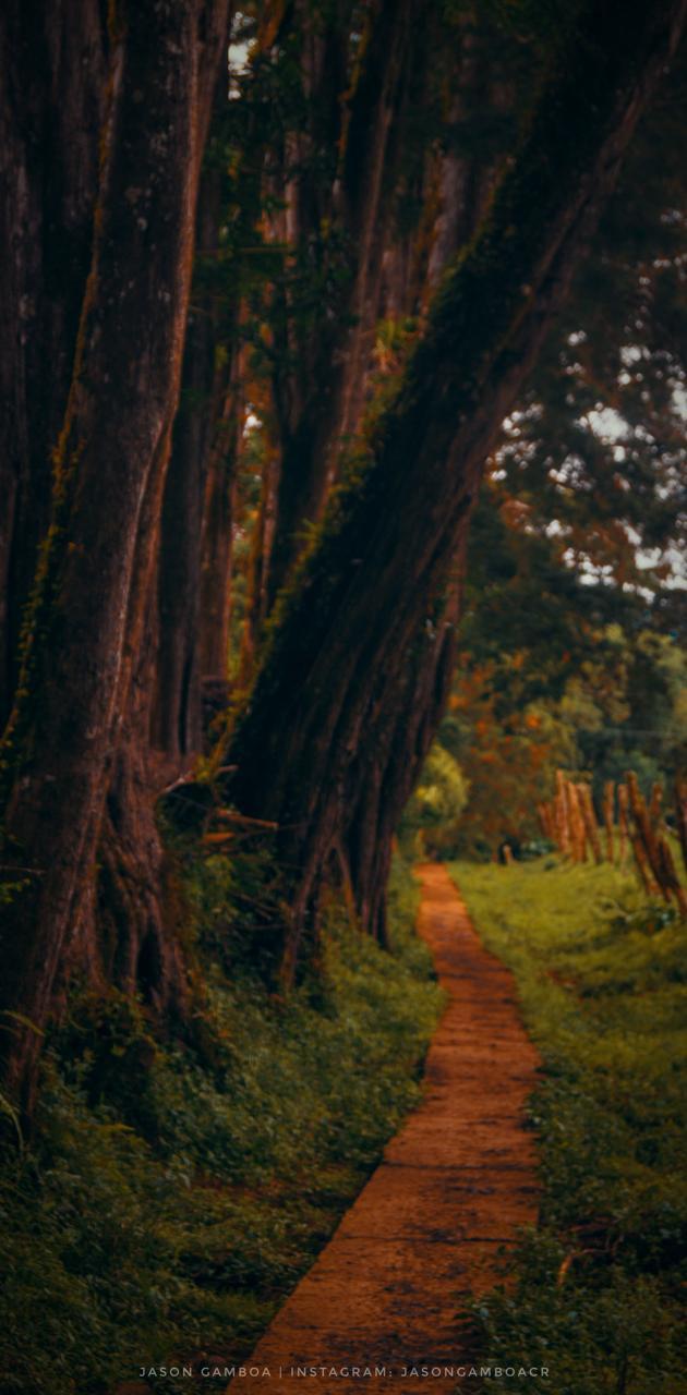 Bosque Costa Rica