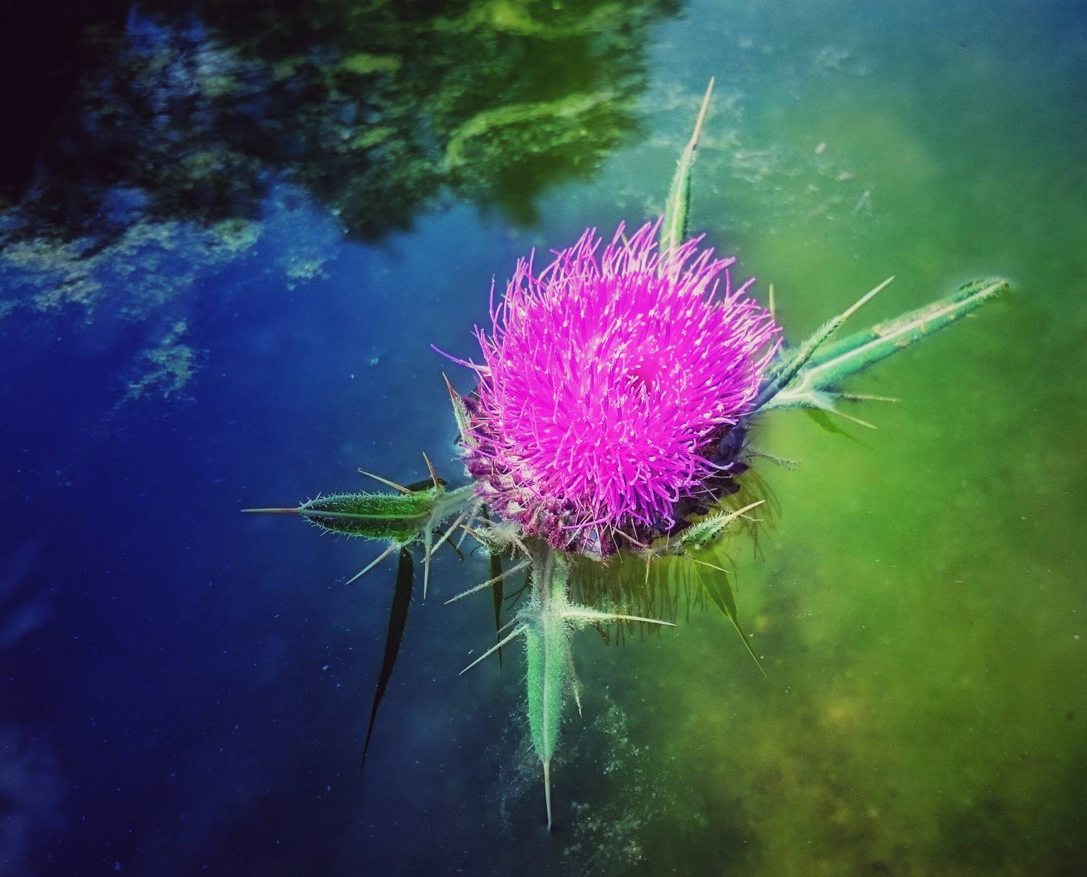 Thistle and the word