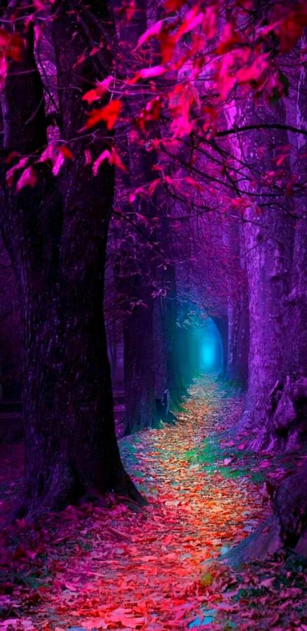 Raibow forest