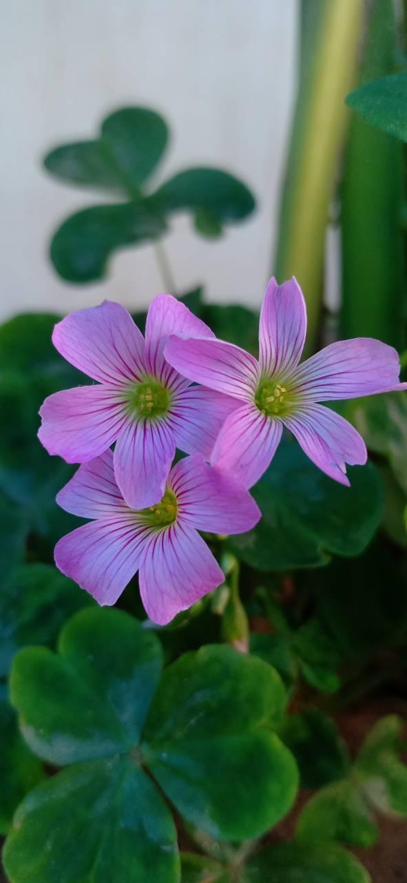 Beatiful flowers