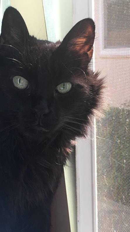 Curious black cat