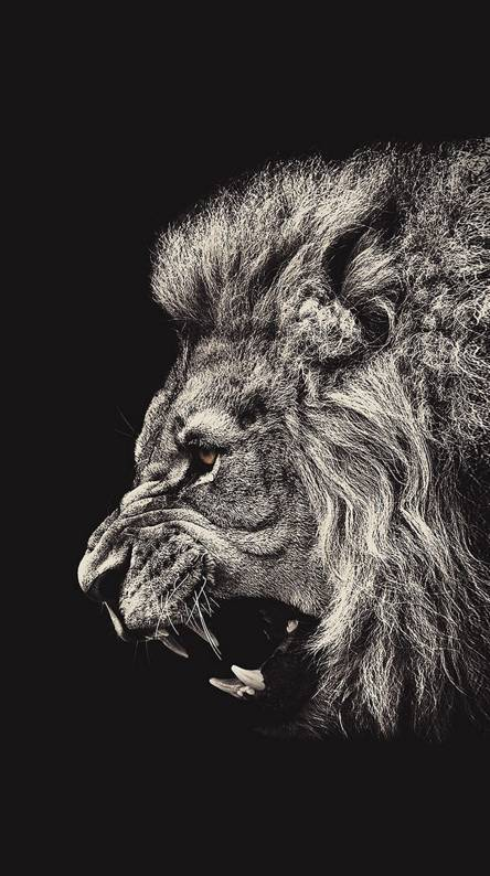 Roar Lion illust art