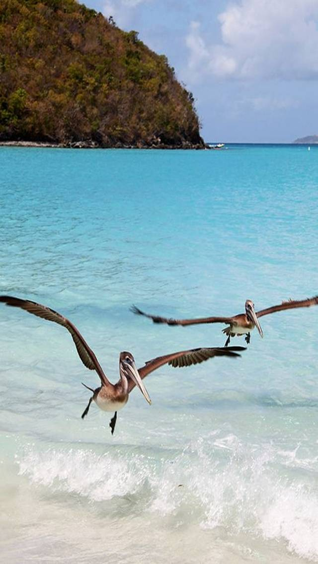 Birds And Sea