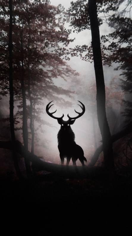 Deer Wallpapers Free By Zedge