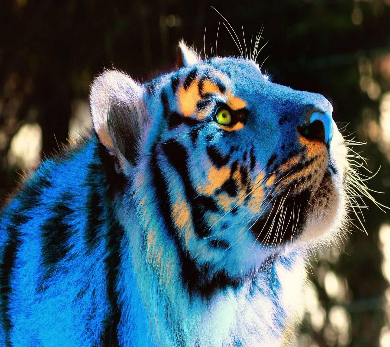 3D Blue Tiger