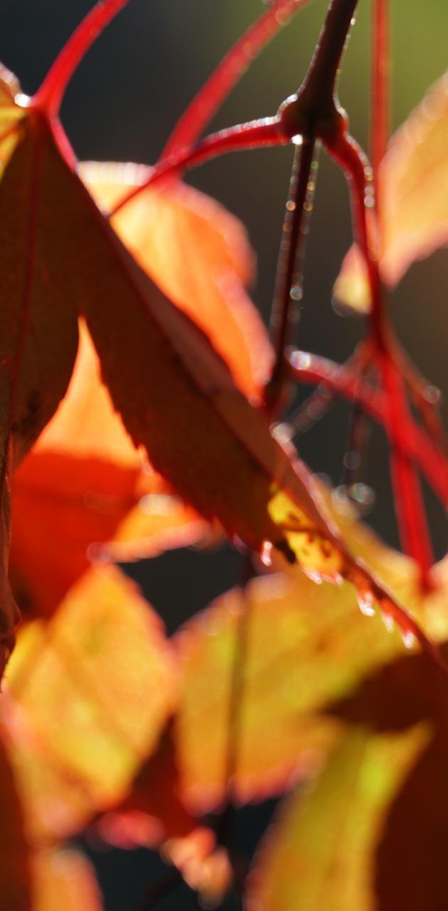 Auttum Leaves