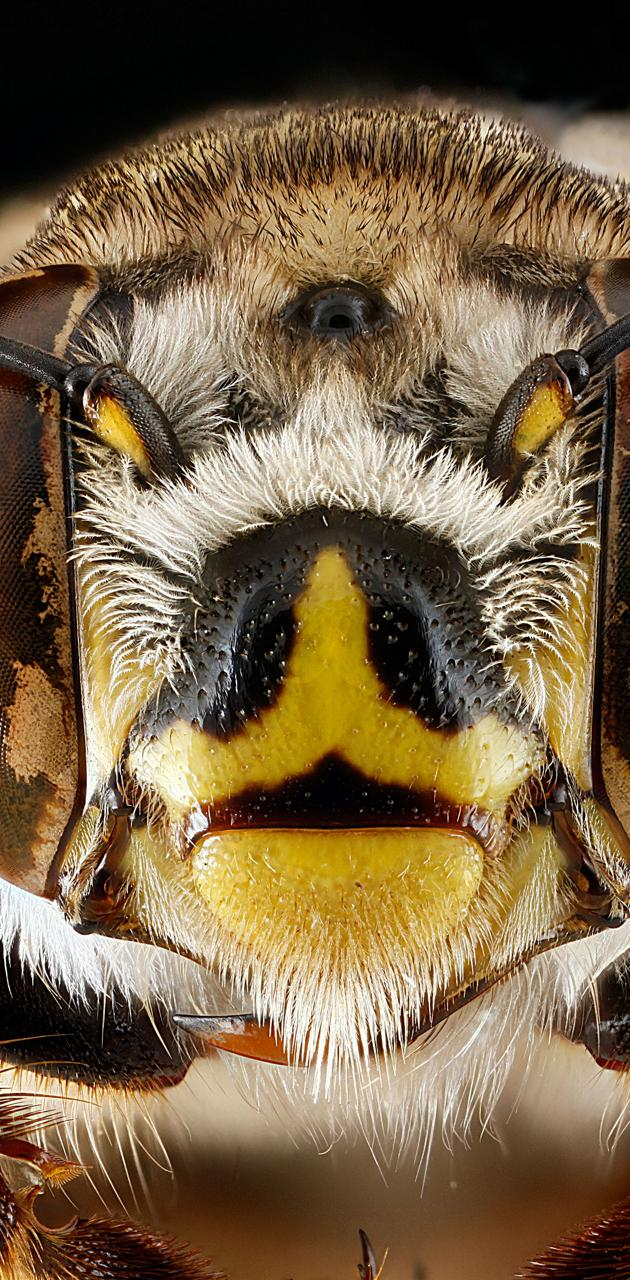 Bees 10