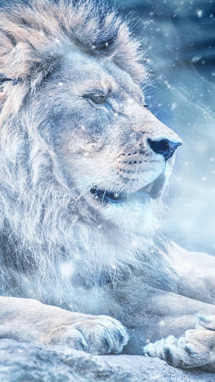 Snow Lion King