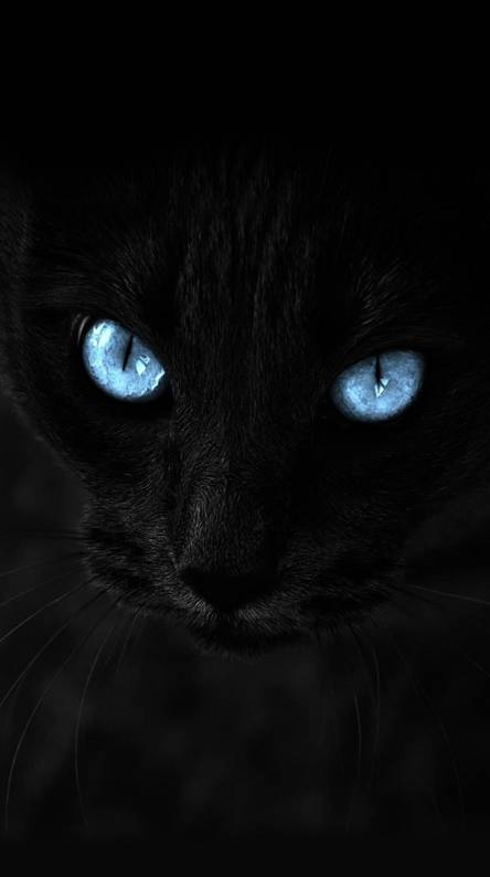 Black Cat Wallpapers Free By Zedge