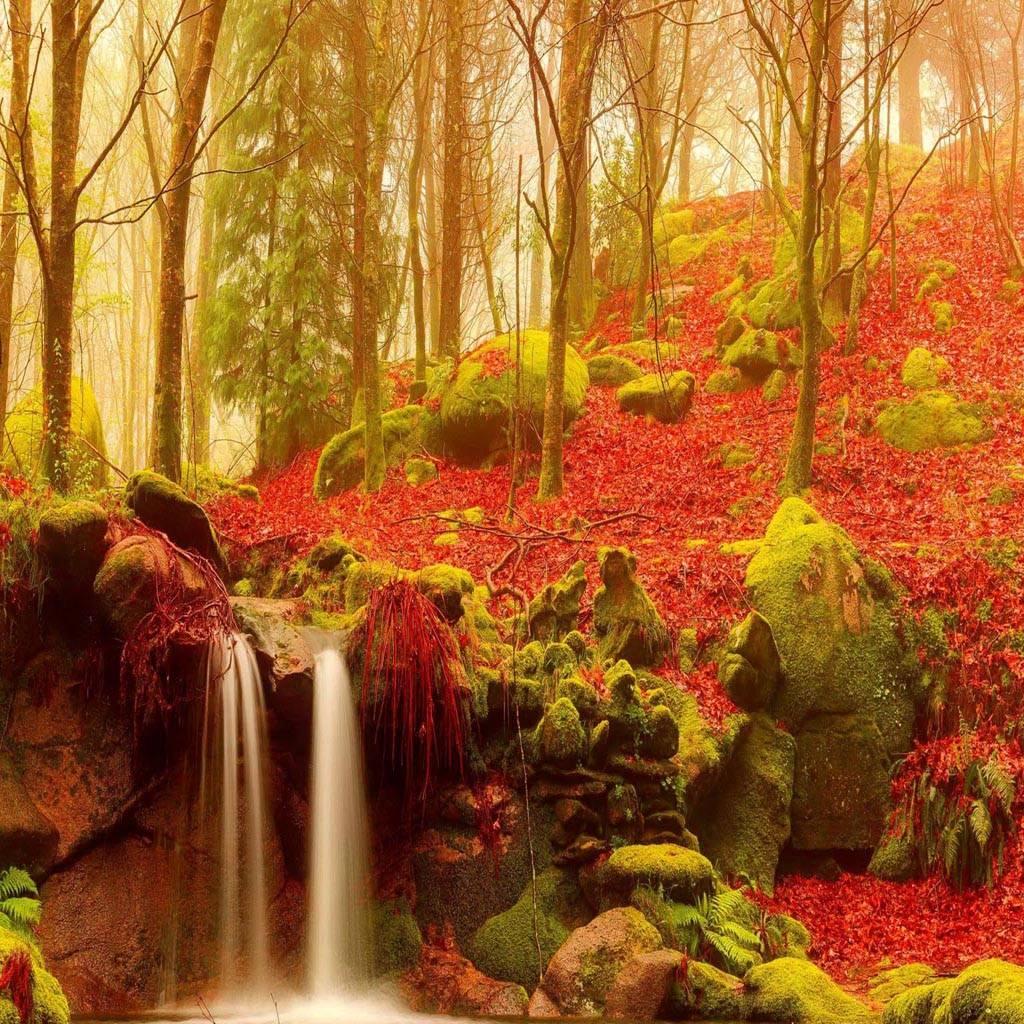 Forest stream autumn