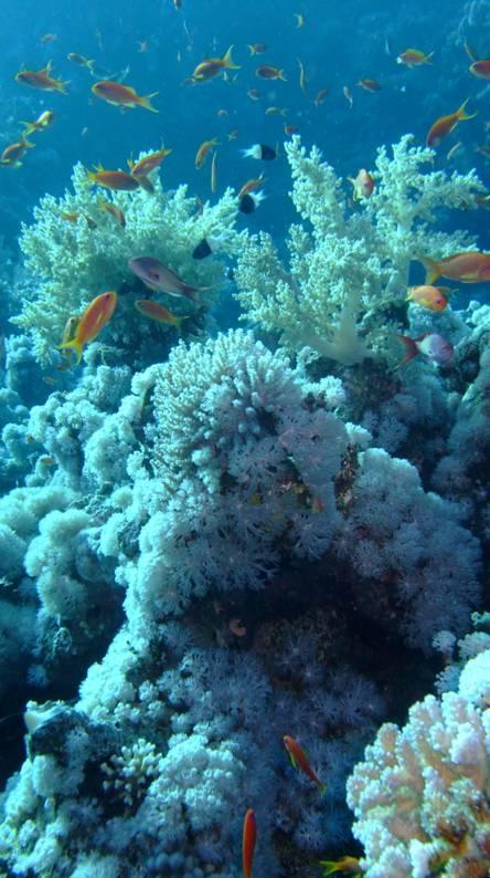 Underwatercolours