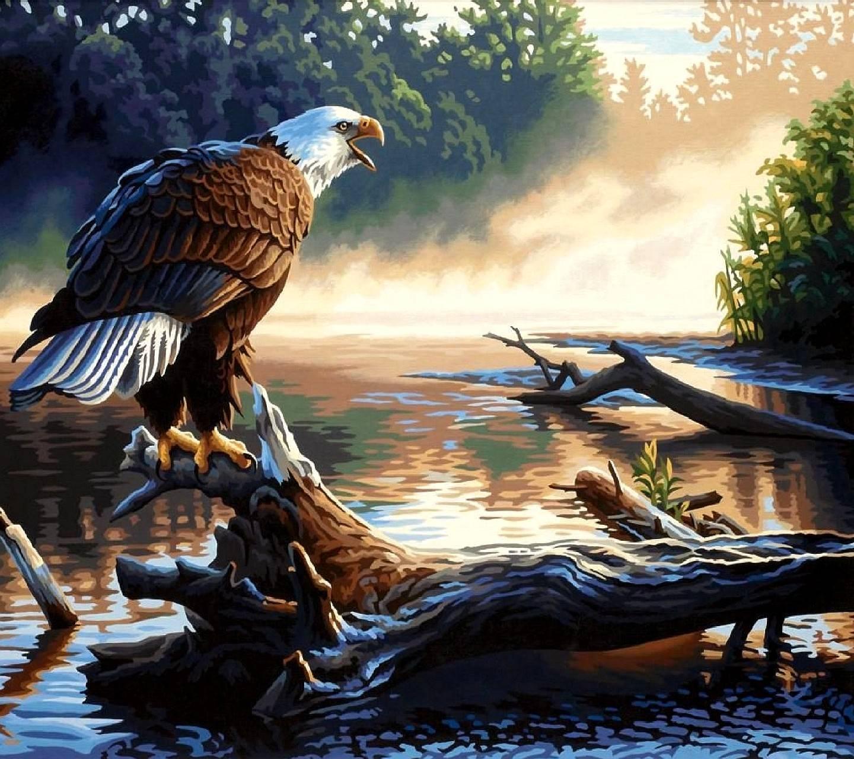 eagle----------