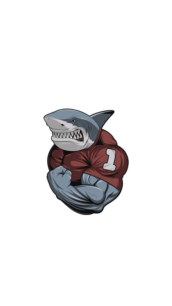 muscular shark