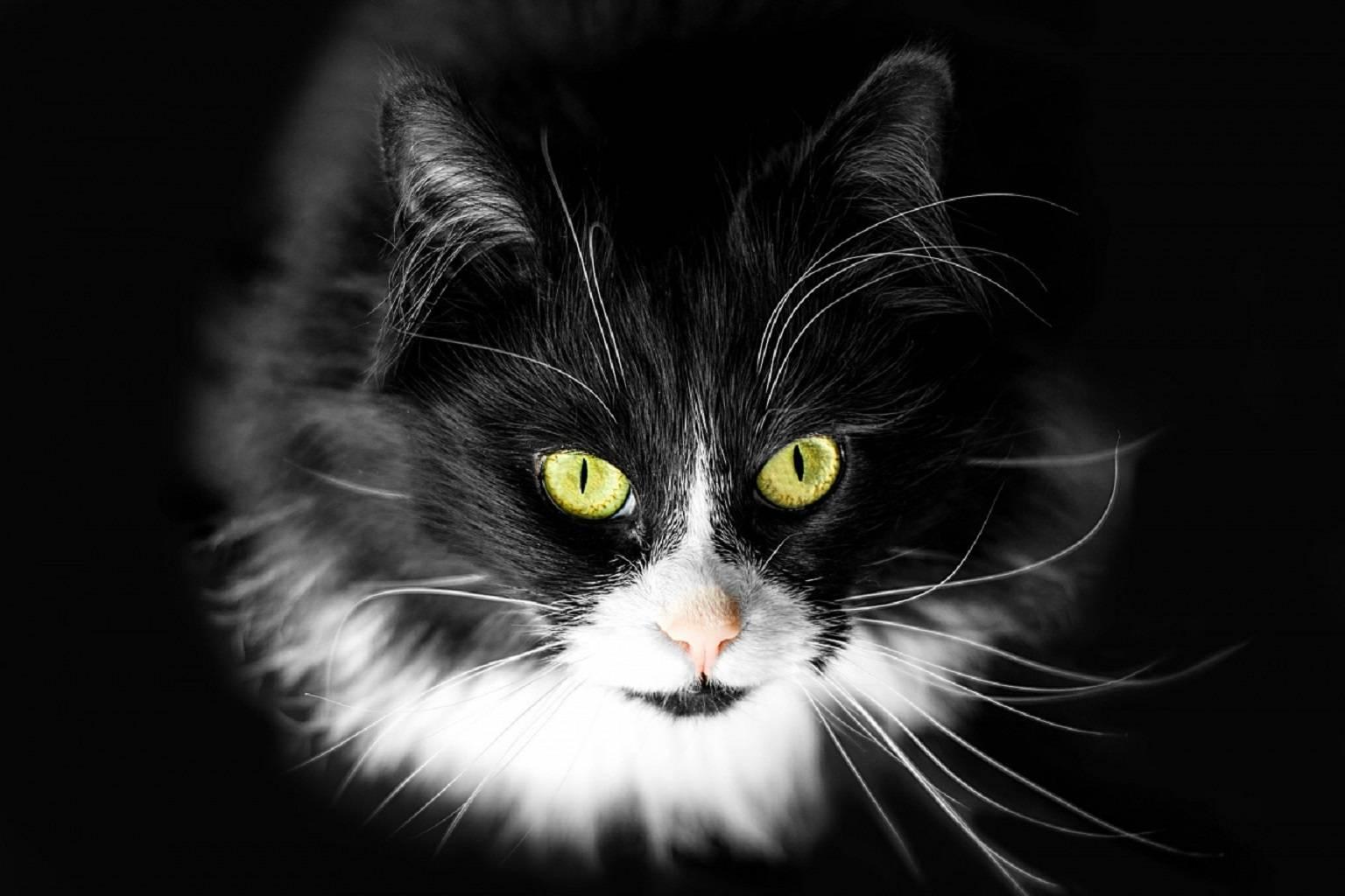 Glaring Kitty