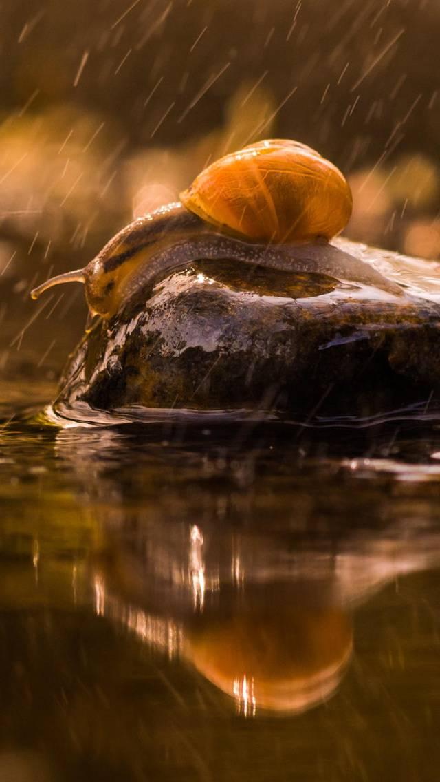 Rainy Snail