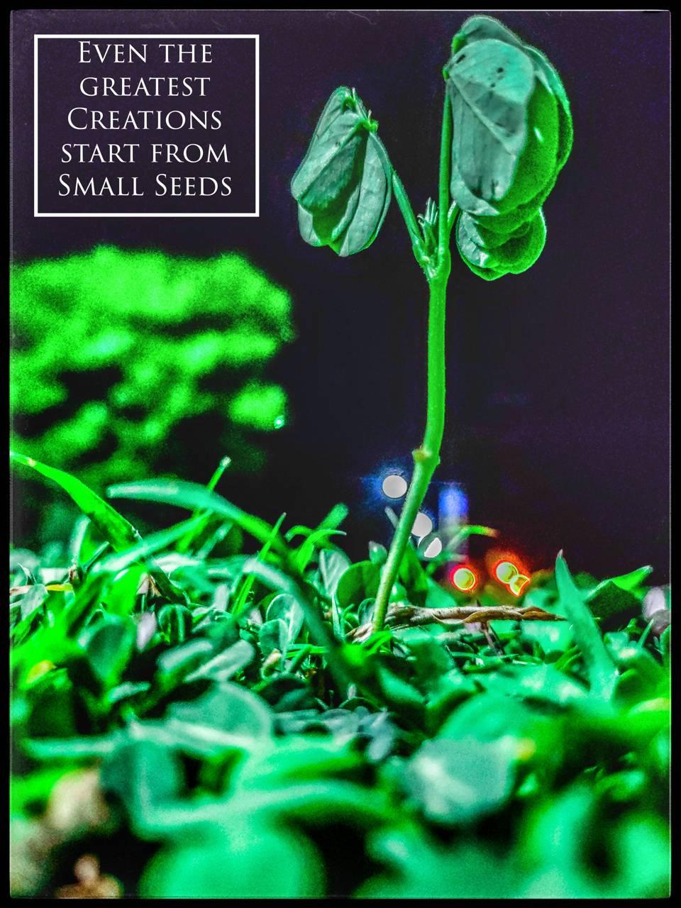 Inspiring plant