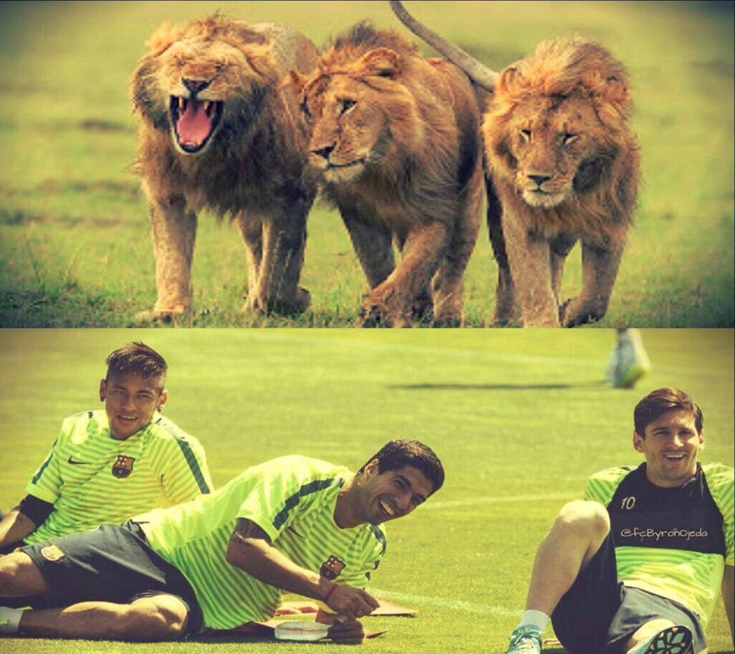The kingss