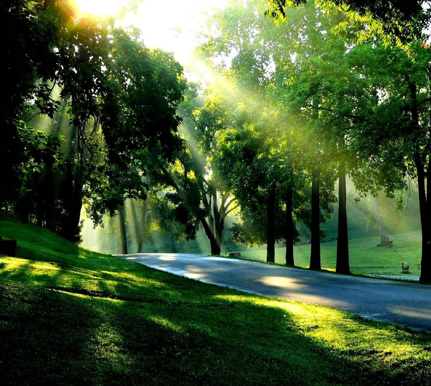 nature----------