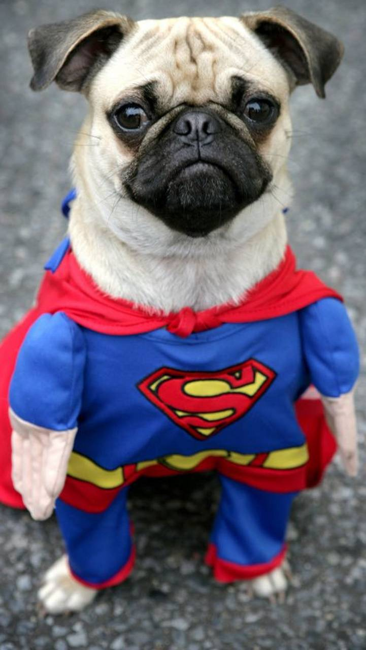 Super Pug