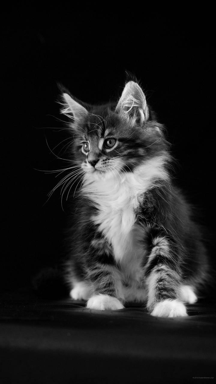 Slatka maca