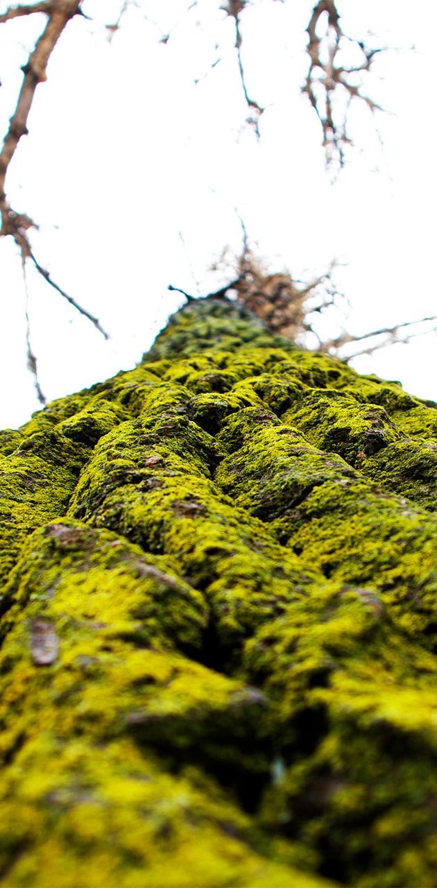 Seasons Greenings