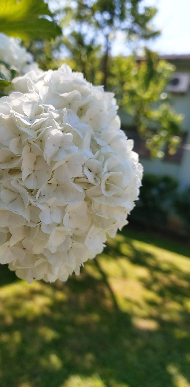 Flower in Lozan