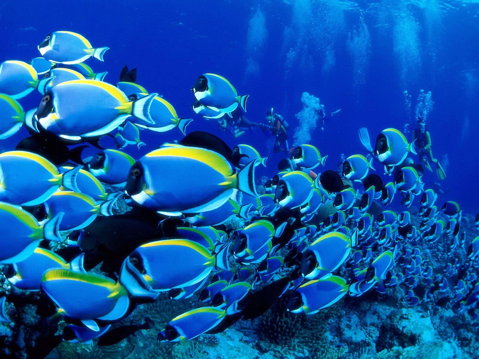 Blue Like A Sea