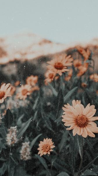 Tan Sunflowers