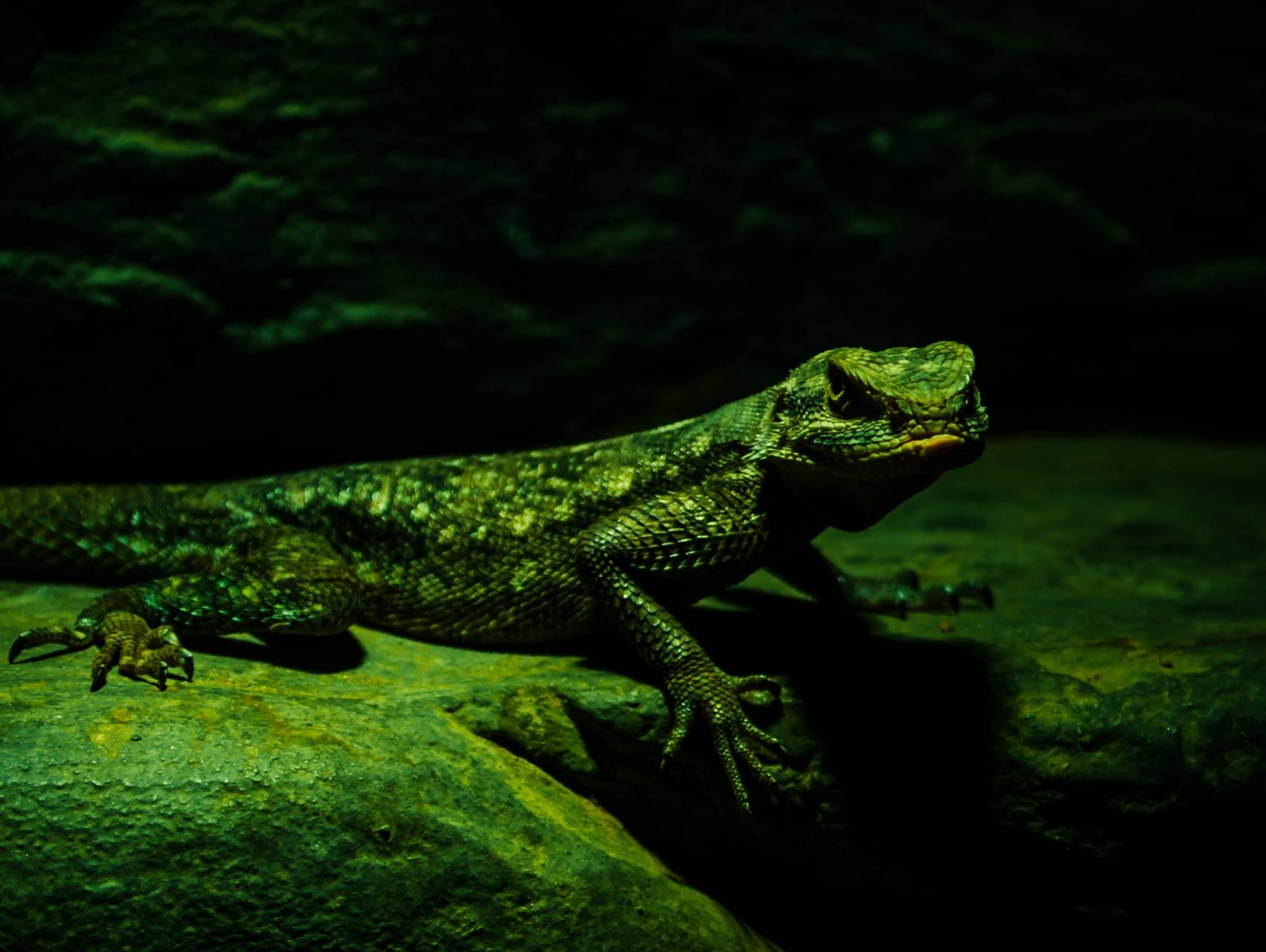 Lizard 320x240