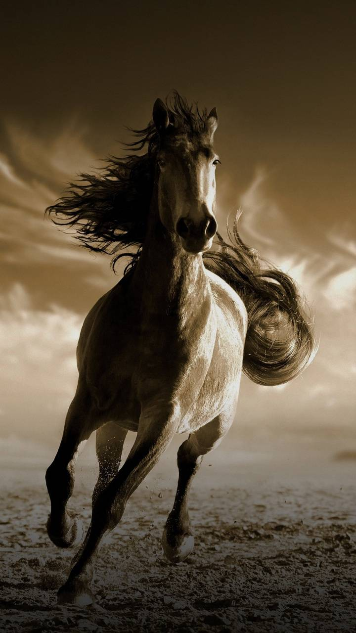 Wild Horse Wallpaper By Tott78 67 Free On Zedge