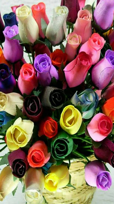 Colourful Roses 4 U