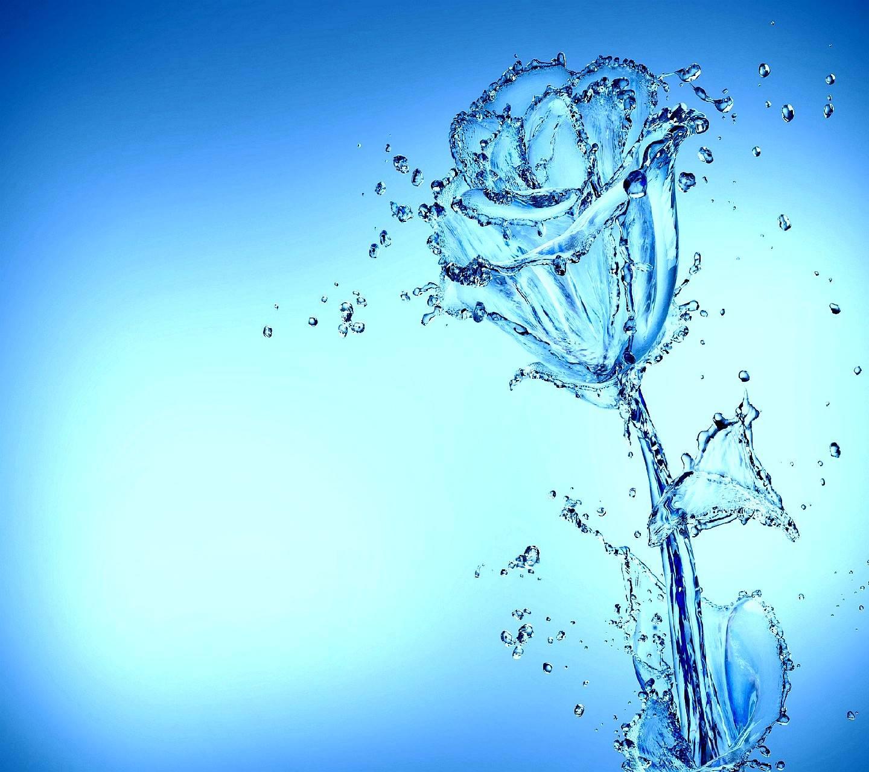 rose---------