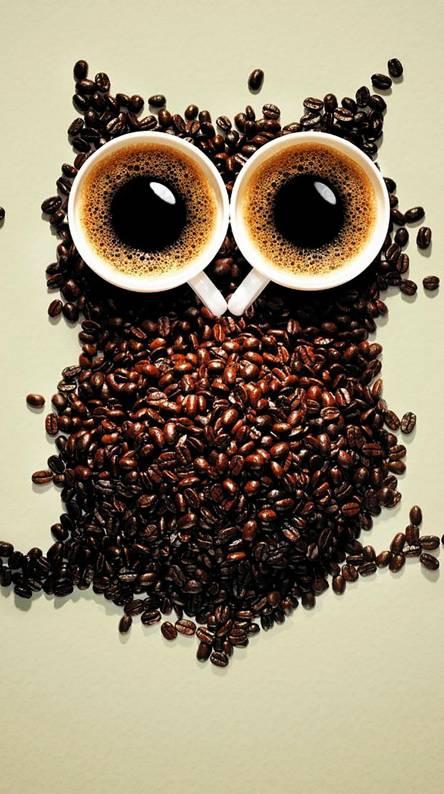 funny coffee owl