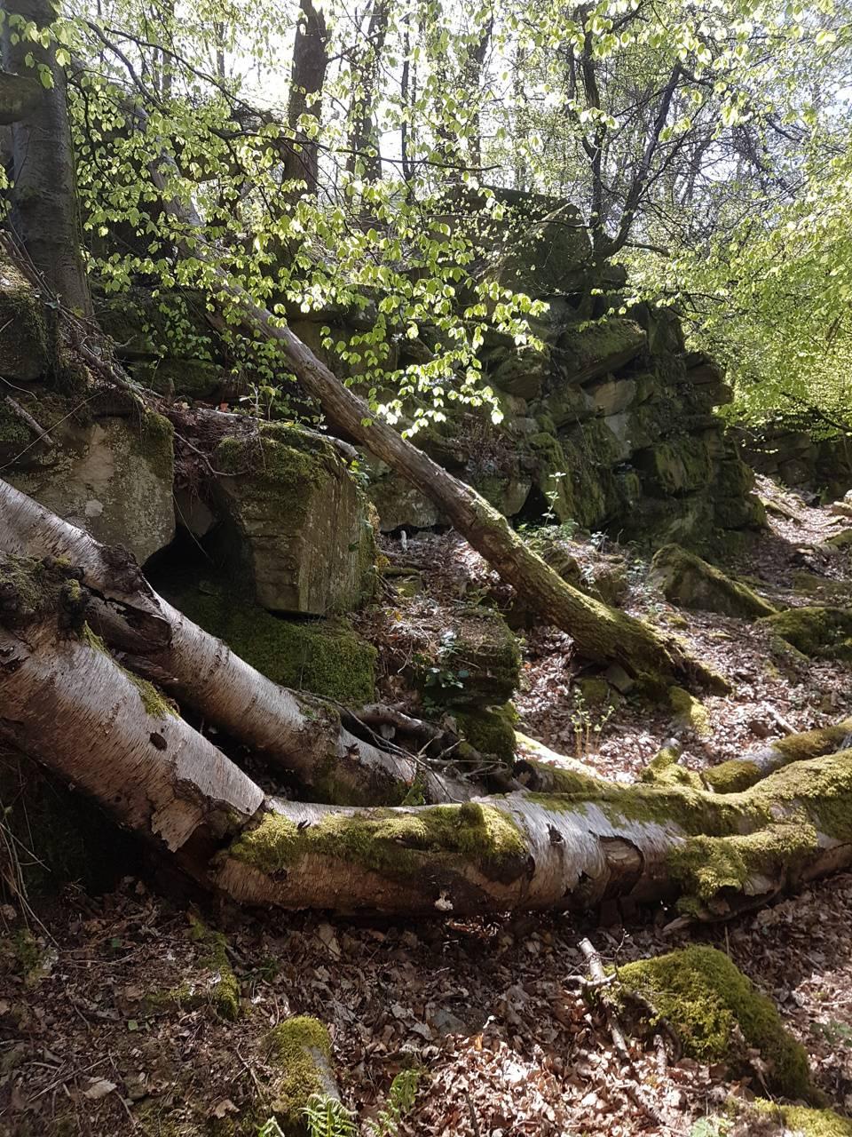 Woodland 1