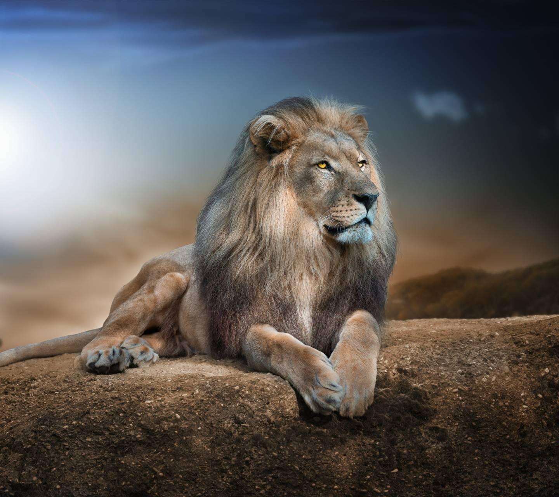 lion wall p