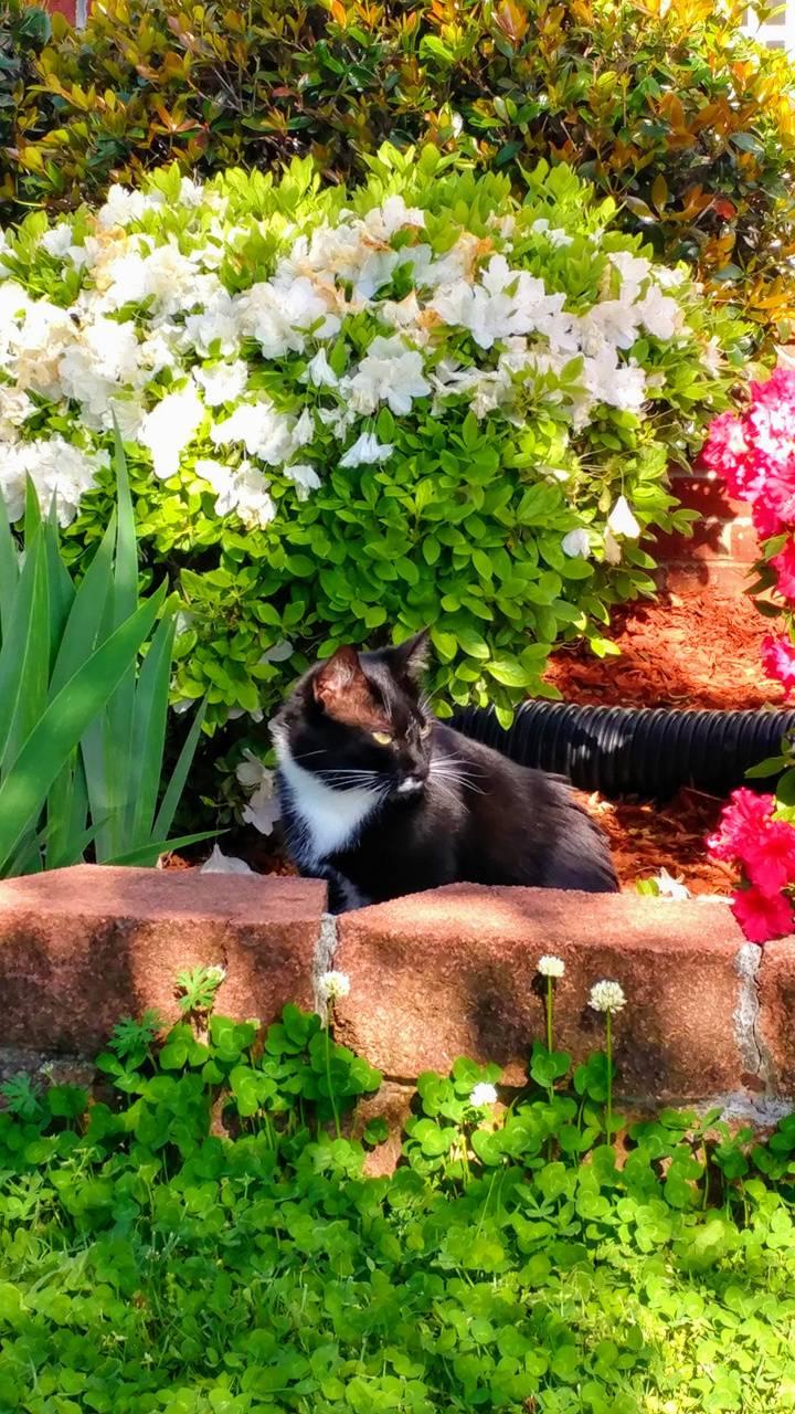 Louis in Garden