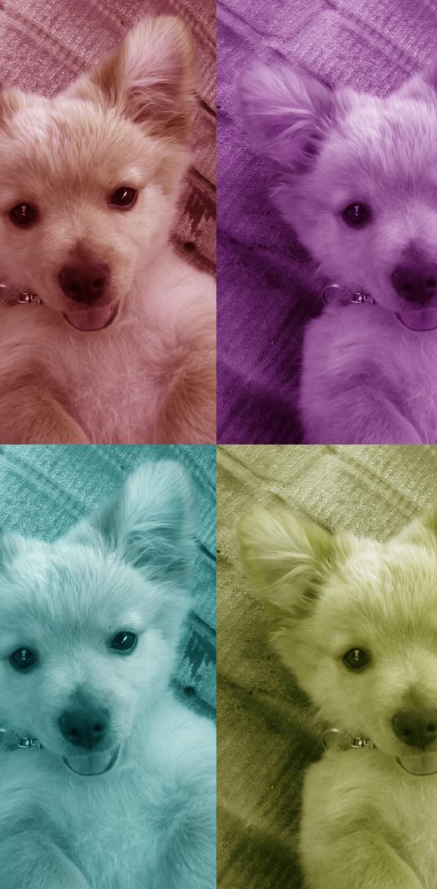 Cute Puppy Rainbow
